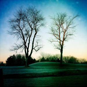 morning_moon_trees(crop)RyanSaywardWhittier